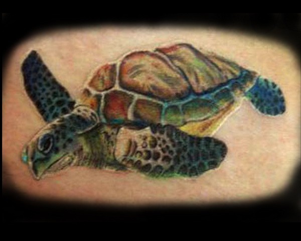 Nice coloured turtle tattoo