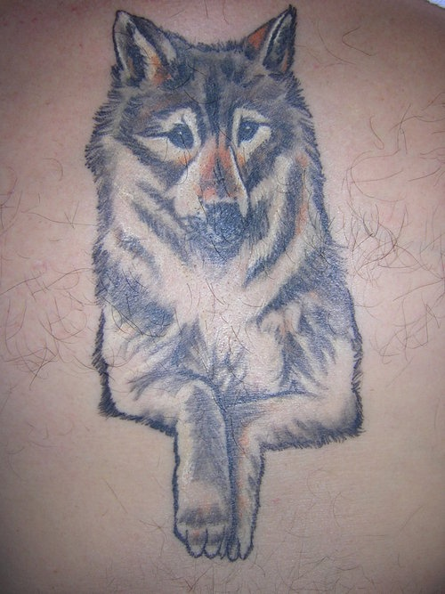 Nice gray wolf with head and paws tattoo