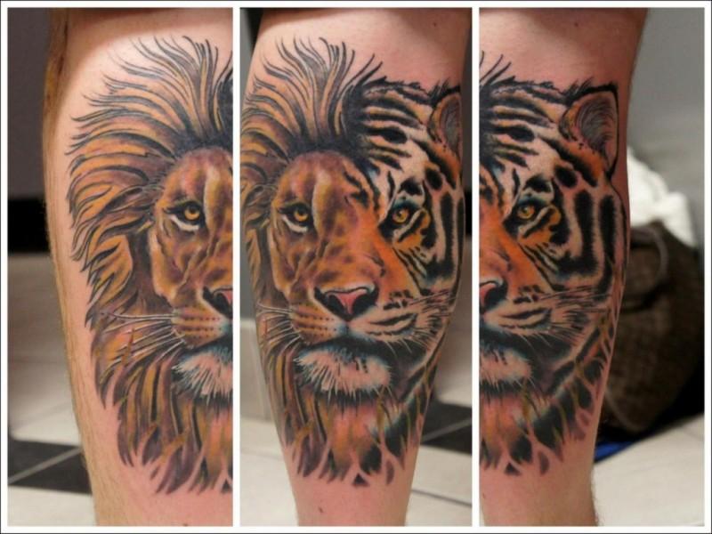 Original Half Lion Half Tiger Tattoo On Leg Tattooimages Biz