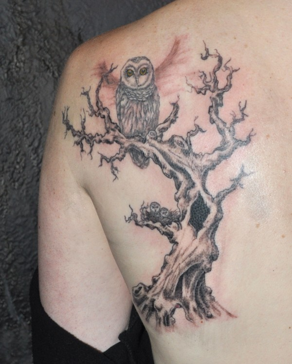 Owls in a tree tattoo on shoulder blade