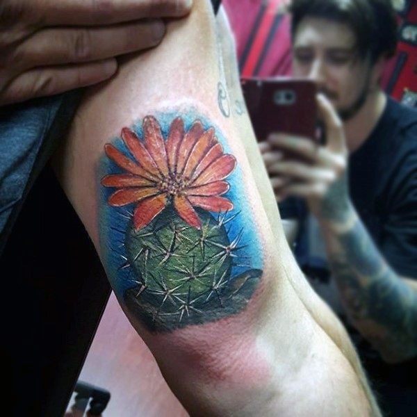 Realism style colored biceps tattoo of small cactus with flower