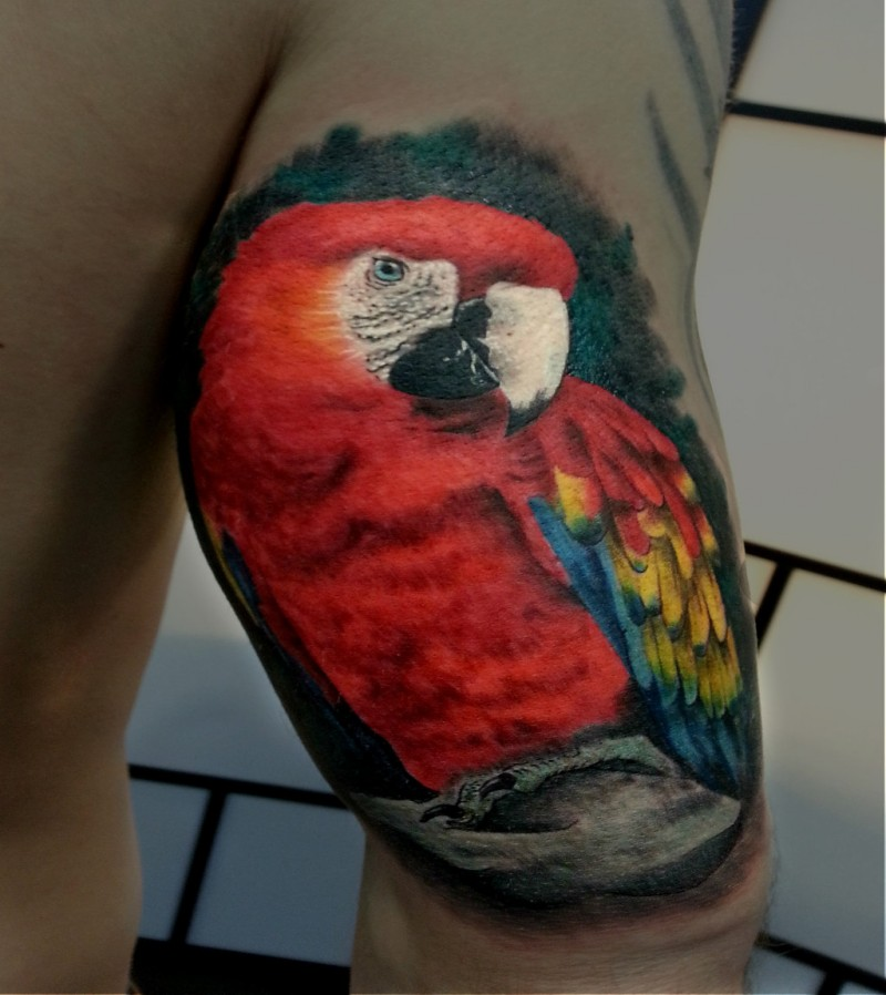 Realism style lifelike colored tattoo of beautiful parrot