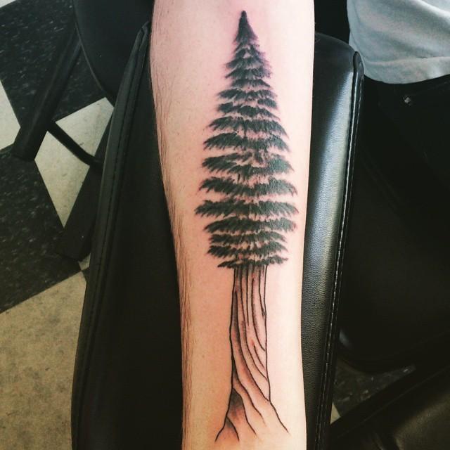 Simple colored big forearm pine tree tattoo