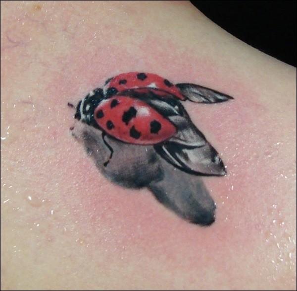 Sehr realistischer Marienkäfer Tattoo