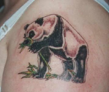 Great panda bear with bamboo