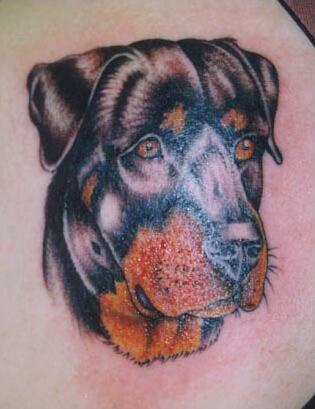 Rottweiler tattoo from photo