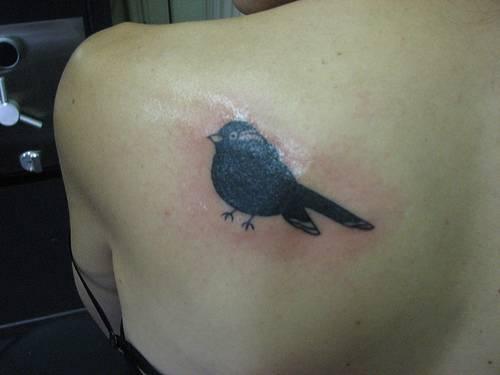 Full black bird on shoulder