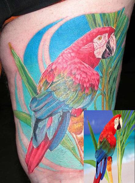 Parrot tattoo from photo