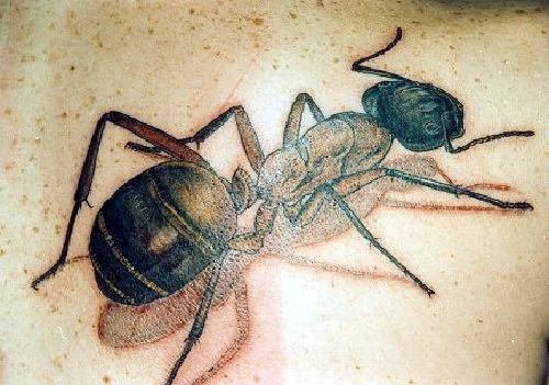 3d black ant tattoo in colour