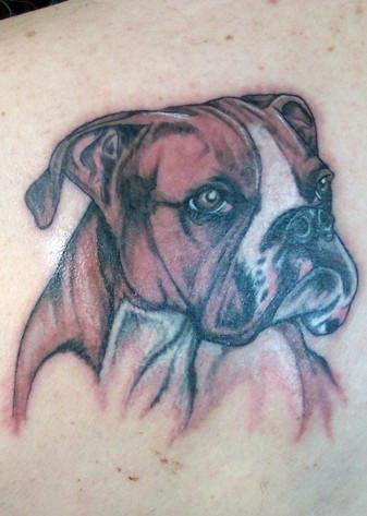 cane boxer tatuaggio colorato