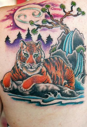 Tiger on rock under sakura tattoo  in colour