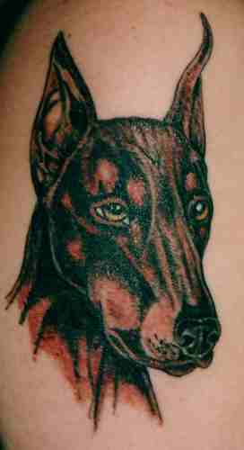 Peaceful doberman tattoo