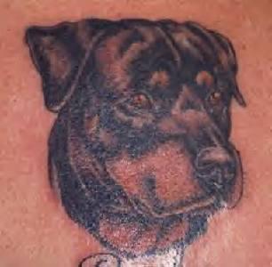 Realistic rottweiler tattoo