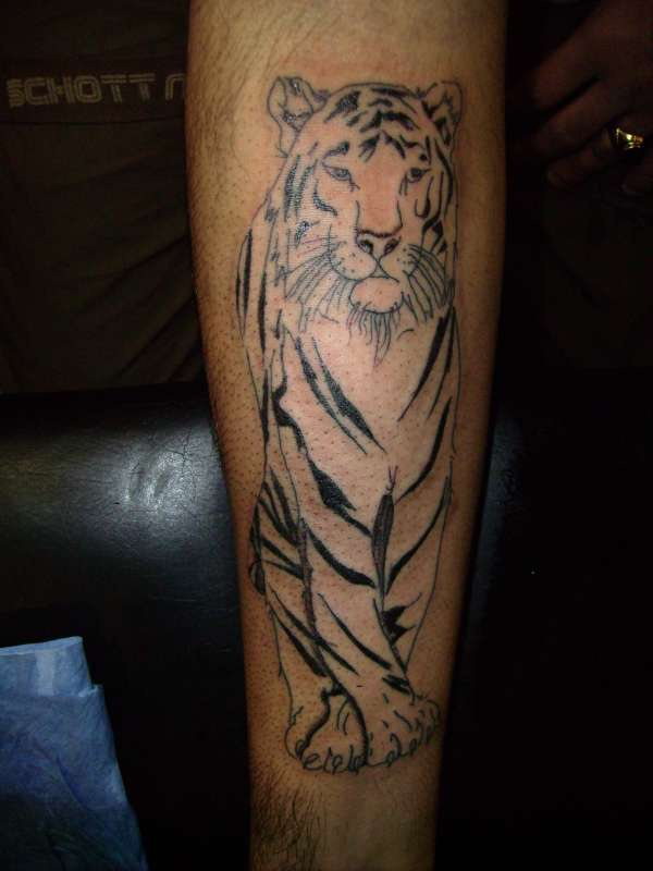 Japanese style white tiger tattoo