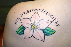 hic habitat felicitas con fiore tatuaggio
