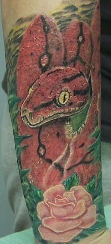 Leg tattoo, big red snake with rose