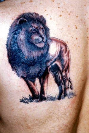 Old male lion tattoo