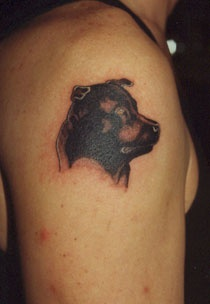 Amstaff dog head shoulder tattoo