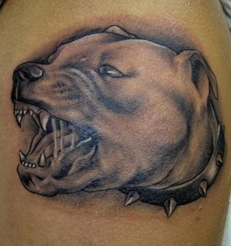 pitbull agressivo tatuaggio