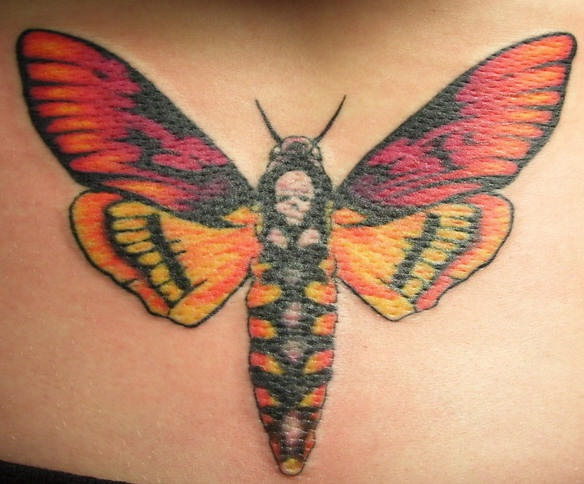 Moth with skull on back  tattoo