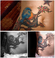 Stomach tattoo, nice, sitting blue bird on the floral branch
