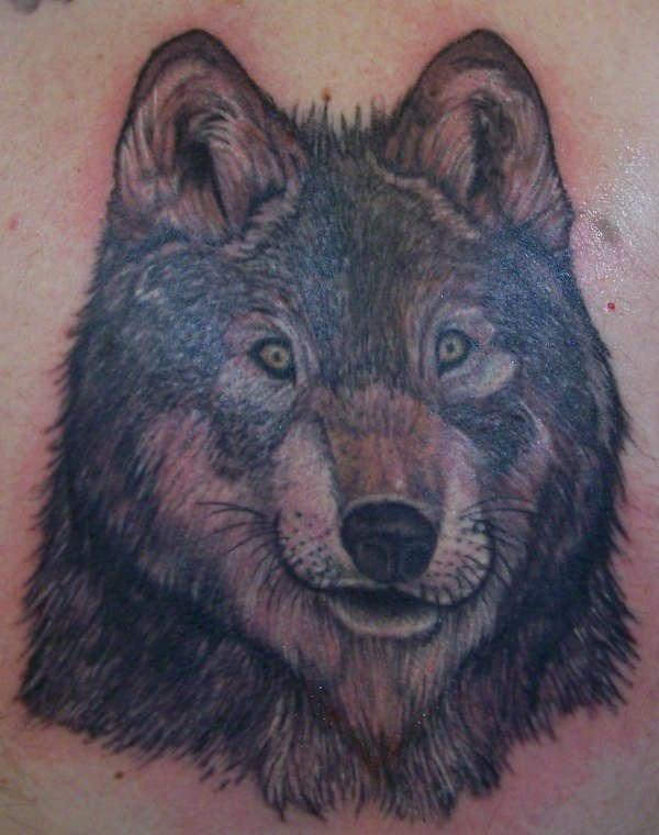 Nice wolf with big ears tattoo