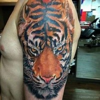 3D style real photo like shoulder tattoo of tiger head