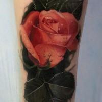 3D molto realistico colorato rosa con gocci d' acqua tatuaggio su gamba