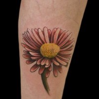 Amazing girly daisy flower tattoo on arm