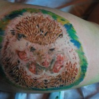 Awesome color-ink hedgehog tattoo on shoulder
