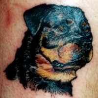 Beautiful black-ink rottweiler dog head tattoo