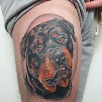 Beautiful realistic colorful rottweiler head tattoo on thigh