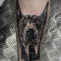 nero e bianco testa Doberman tatuaggio su braccio di uomo