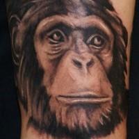 Great black-and-white chimpanzee head tattoo
