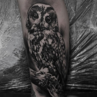 Great black and white owl tattoo on forearm