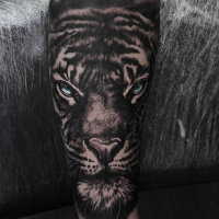 Great tiger face tattoo on forearm