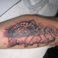 Huge black-and-white ant tattoo for men on shin