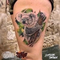 Koalabärntätowierung auf Bein