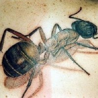 Large colorful 3D ant tattoo for men on back