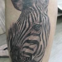 Großer realistischer Zebrakopf Tattoo am Arm