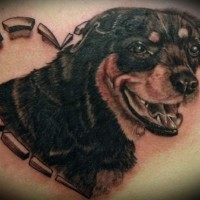 Lovely black-and-white rottweiler in heart tattoo