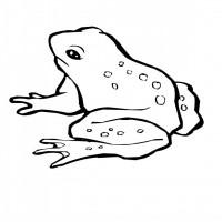 outline cartoon frog tattoo design. Black Bedroom Furniture Sets. Home Design Ideas