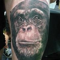 Realistic black-and-white chimpanzee head tattoo on thigh