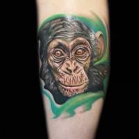 Realistic colorful chimpanzee in tropics tattoo on arm