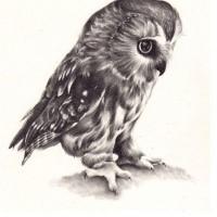 Realistic Full Size Black And White Owl Tattoo Design Tattooimagesbiz