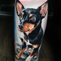 Realistic miniature pinscher tattoo