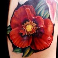 Realistische Mohnblume mit Tautropfen Tattoo an der Schulter