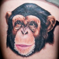 Small awesome colorful chimpanzee head tattoo on side