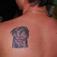 carino piccolo testa Rottweiler tatuaggio su scapola