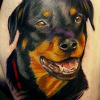 Sweet colorful rottweiler head tattoo for men on upper arm